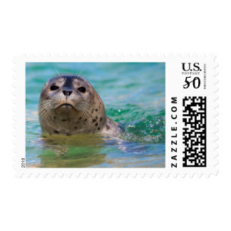 Swimming with a baby seal postage