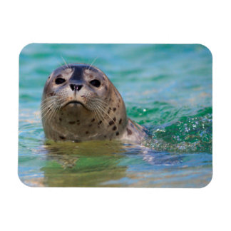 Swimming with a baby seal rectangular photo magnet