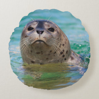 Swimming with a baby seal round pillow