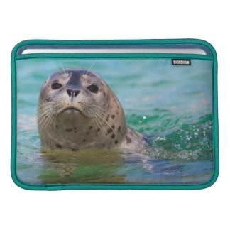 Swimming with a baby seal sleeve for MacBook air