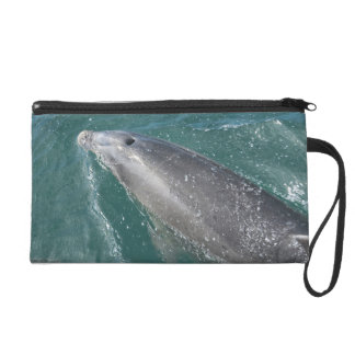 Swimming with dolphins and Dolphin Watch Wristlet Purses