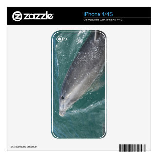Swimming with dolphins and Dolphin Watch iPhone 4 Decal