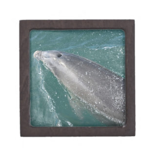 Swimming with dolphins and Dolphin Watch Keepsake Box