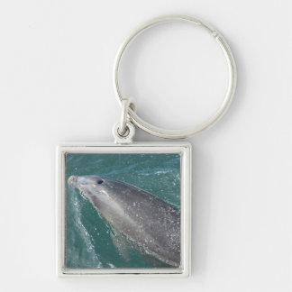 Swimming with dolphins and Dolphin Watch Keychain