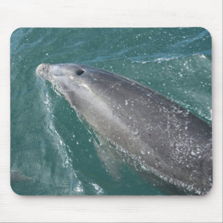 Swimming with dolphins and Dolphin Watch Mouse Pad