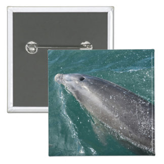 Swimming with dolphins and Dolphin Watch Pinback Button