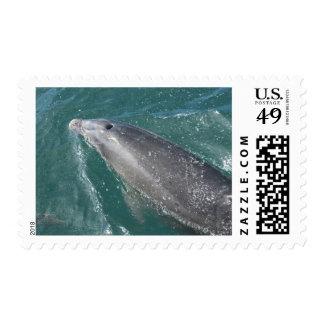 Swimming with dolphins and Dolphin Watch Postage