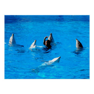 Swimming with five dolphins in Spain Poster