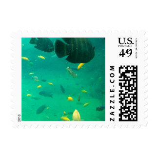 Swimming With The Fish Postage Stamp