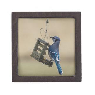 Swinging Blue Jay Gift Box