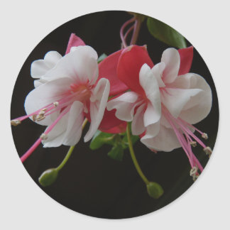 Swingtime Fuschia Classic Round Sticker
