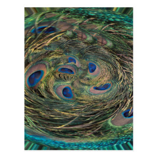 Swirling Feathers Postcard