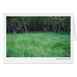 Swirling grasses, St. Croix River Card