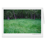 Swirling grasses, St. Croix River Cards