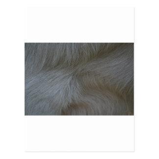Swirls of white goat hair pattern postcard