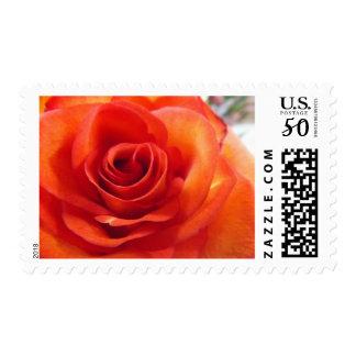 Swirls Postage Stamps