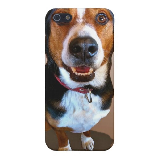 Swiss Dog with attitude iPhone 5 Covers