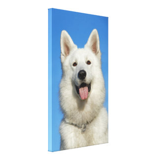 Swiss Shepherd Dog Stretched Canvas Print