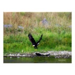 Swooping Eagle Poster