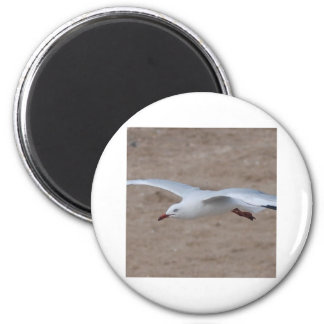 Swooping Gull 2 Inch Round Magnet