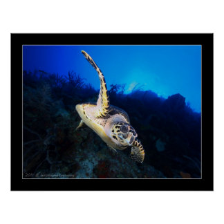 Swooping Turtle Poster
