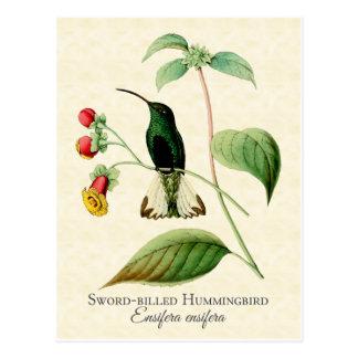 Sword Billed Hummingbird Art Postcard