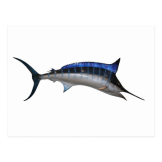 Swordfish Postcard