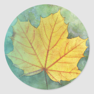 Sycamore Maple Autumn Leaf Classic Round Sticker