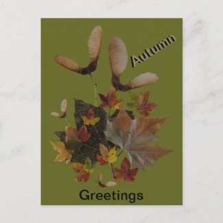 Sycamore Maple Leaves Collage AUTUMN Postcard