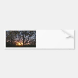 Sycamore Sunrise Bumper Sticker