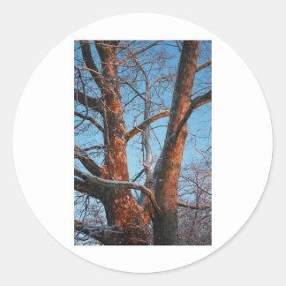 Sycamore Sunrise Classic Round Sticker