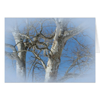 Sycamore Tree Against Winter Sky Items Card