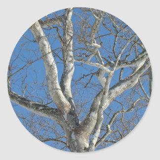 Sycamore Tree Against Winter Sky Items Classic Round Sticker