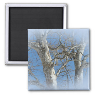 Sycamore Tree Against Winter Sky Items Magnet