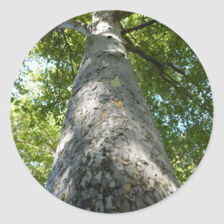 Sycamore Tree Classic Round Sticker