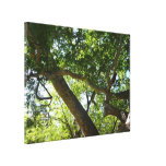 Sycamore Tree Green Nature Photography Canvas Print