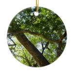 Sycamore Tree Green Nature Photography Ceramic Ornament