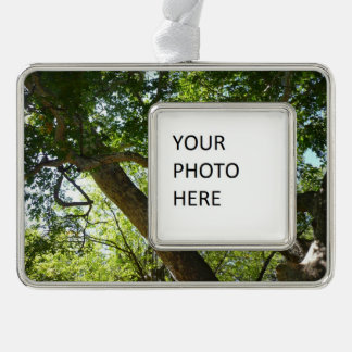 Sycamore Tree Green Nature Photography Christmas Ornament