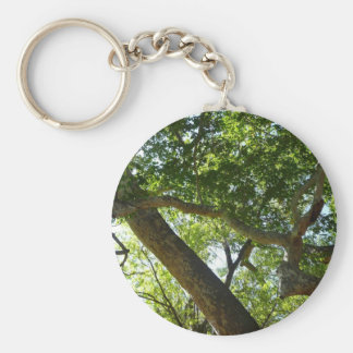 Sycamore Tree Green Nature Photography Keychain