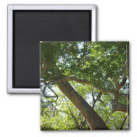 Sycamore Tree Green Nature Photography 2 Inch Square Magnet