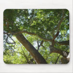 Sycamore Tree Green Nature Photography Mouse Pad