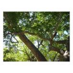 Sycamore Tree Green Nature Photography Photo Print