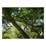 Sycamore Tree Green Nature Photography Poster