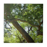 Sycamore Tree Green Nature Photography Small Square Tile