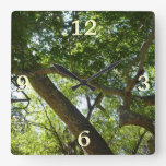 Sycamore Tree Green Nature Photography Square Wall Clock