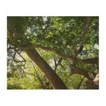 Sycamore Tree Green Nature Photography Wood Wall Decor
