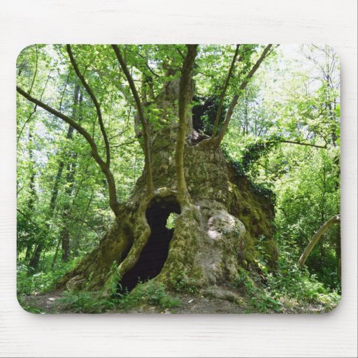Sycamore Tree Home Mousepad
