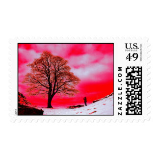 Sycamore Tree Postage Stamp