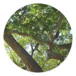 Sycamore Tree Sticker