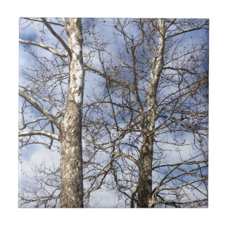 Sycamore Trees in a Winter Sky --- Ceramic Tile